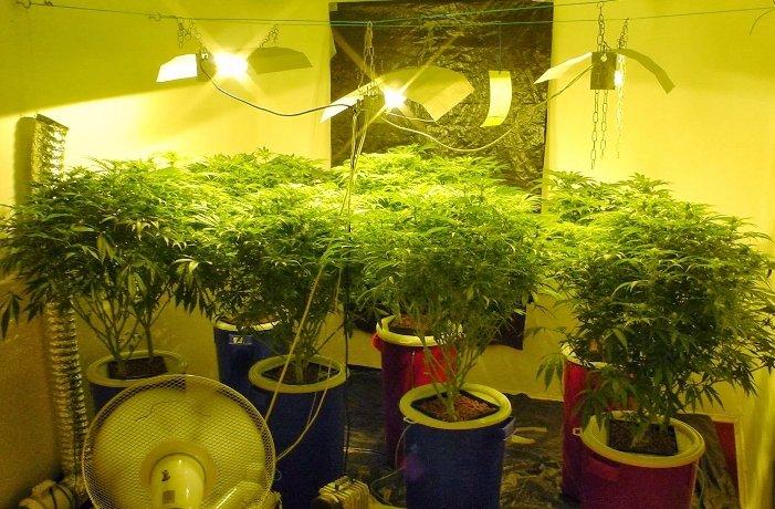 Дома выращивали марихуану ак 47 марихуана